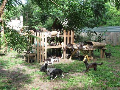 cats yard